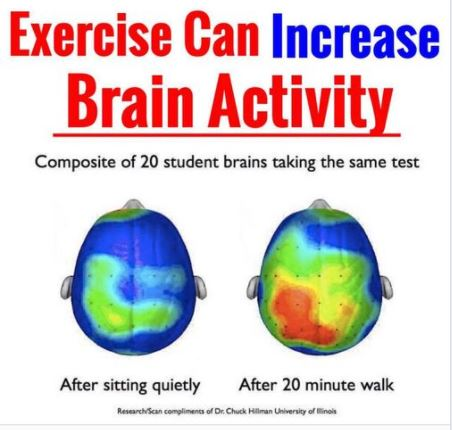 Cerebros con y sin actividad física